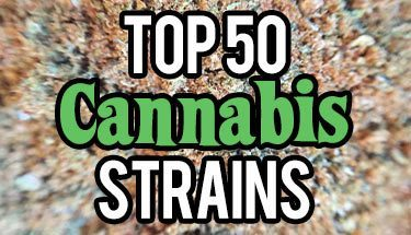 Top-50-Cannabis-Strains-sm