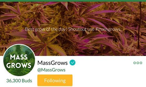 MassGrows-Mass-Roots-Account