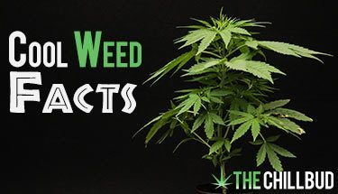 9-Cool-Facts-About-Weed
