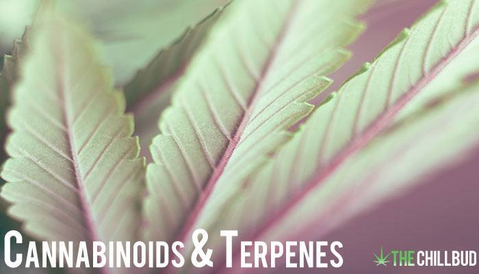 Cannabinoids-and-Terpenes-in-Cannabis---Boiling-Points-and-Benefits-text