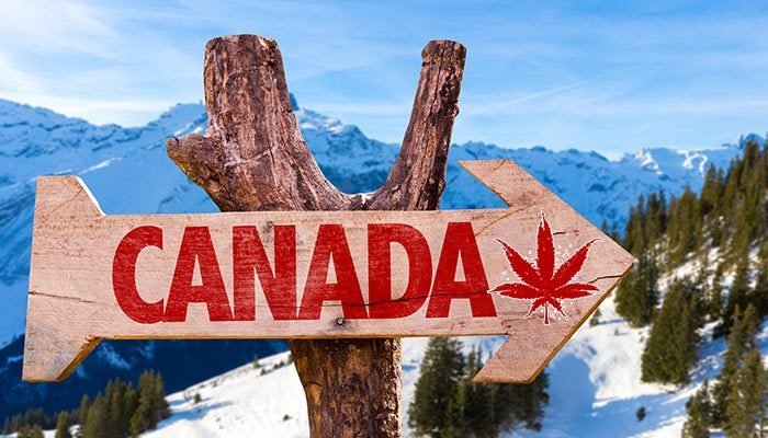 health canada licensed producers application