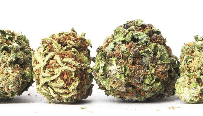 20-Cannabis-Strains-High-In-THC
