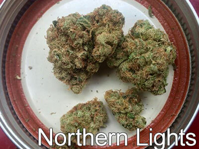 Northern-Lights-cannabis-strain