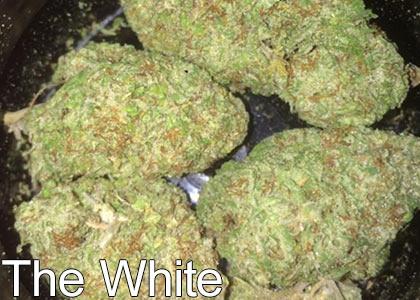 The-White-Marijuana-Strain-with-High-THC-Levels