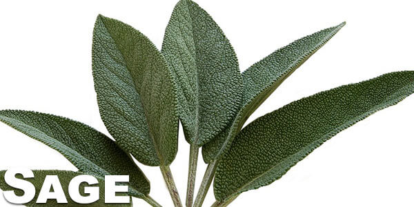 benefits-of-smoking-sage