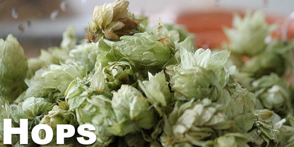 health-benefits-of-vaporizing-hops