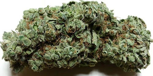 Candy-Jack-cannabis
