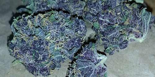 Purple-Diesel