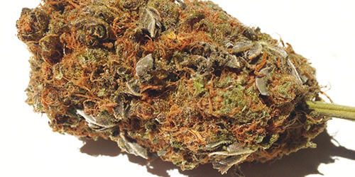 25 Best Wake and Bake Cannabis Strains – The Chill Bud