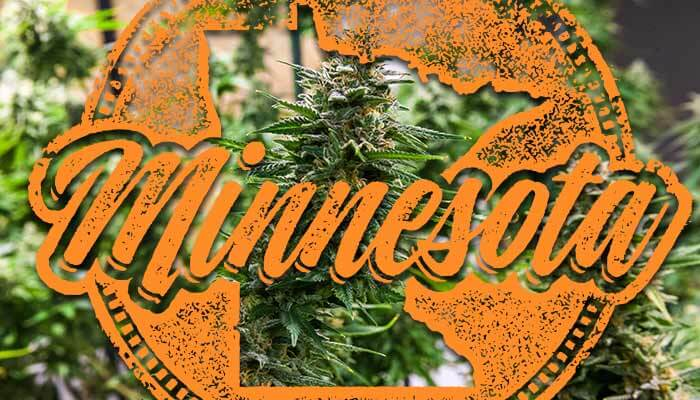 Minnesota-Cannabis-Manufacturers-Post-Low-First-Year-Profits