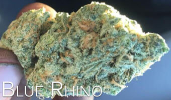 Blue-Rhino-strain-for-anxiety