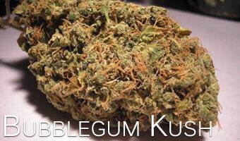 Bubblegum-Kush