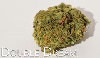 Double-Dream