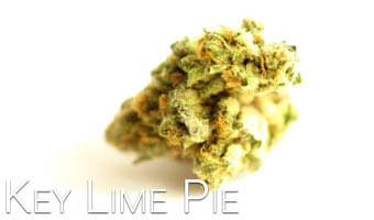 Key-Lime-Pie-cannabis