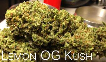Lemon-OG-Kush