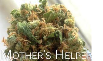 Mother's-Helper
