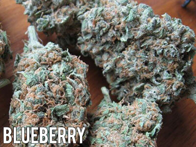 Blueberry-strain-cannabis