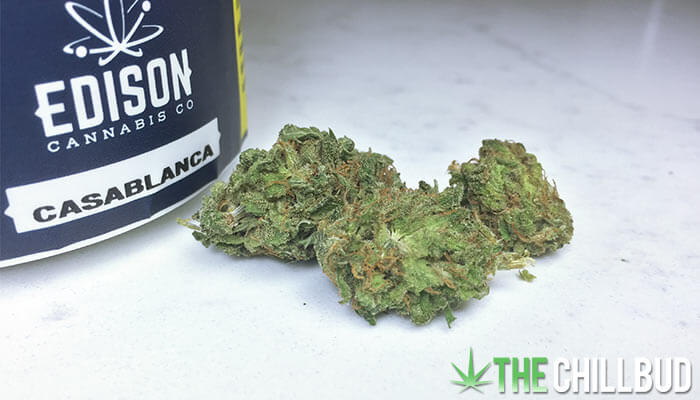 Casablanca-Edison-Cannabis-Co-Strain-Review