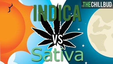 Sativa-vs-Indica-infographic1