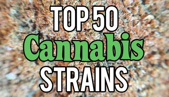 Top-50-Cannabis-Strains