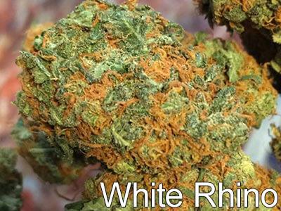 White-Rhino-weed-strain