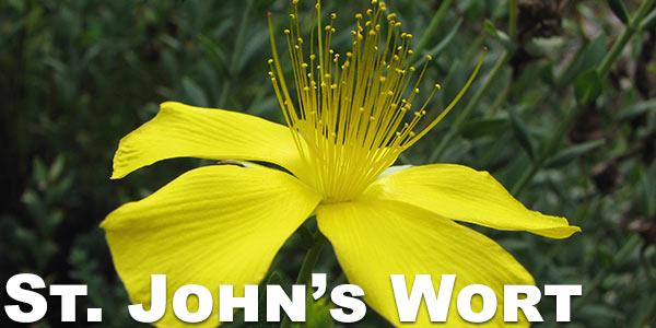 St.-John's-Wort