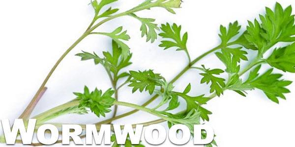 smoking-wormwood