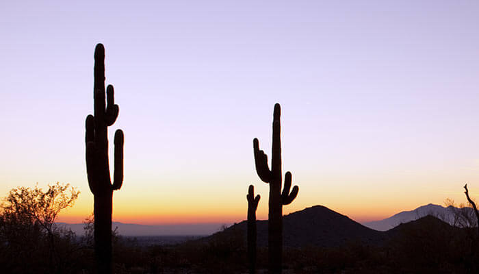 Phoenix-Preps-for-Possible-Statewide-Legalization-of-Recreational-Cannabis
