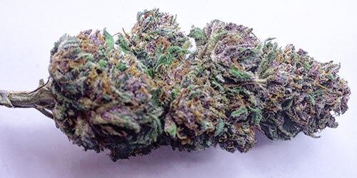 Granddaddy-Purple