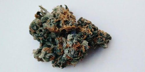 Lemon-Haze-strain