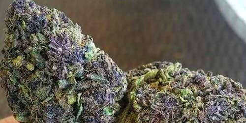 Purple-Berry weed strain