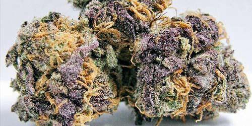 Purple-Urkle purple weed