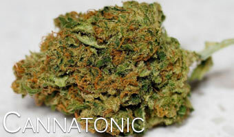 Cannatonic-Anxiety-relieving-cannabis-strains