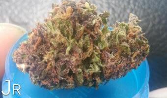 Jr-cannabis-jagermeister