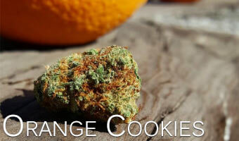 Orange-Cookies-Cannabis-Strain-for-Anxiety