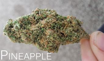 Pineapple-cannabis-strain