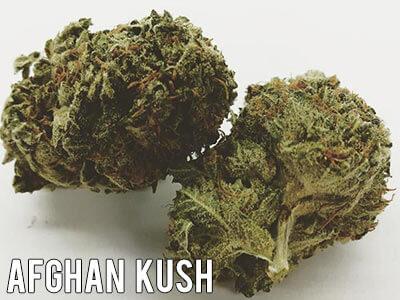 Afghan-Kush-Strain-Indica