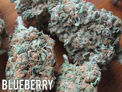 Blueberry-strain-cannabis