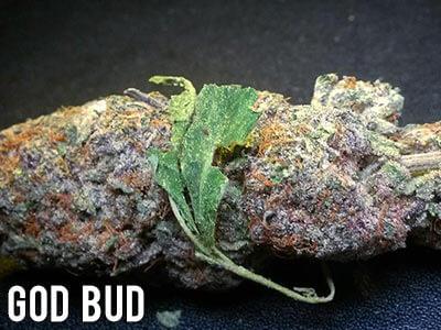 God-Bud-indica-strain