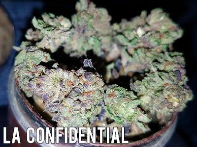 LA-Confidential-weed-strain-indica