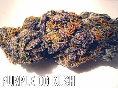 Purple-OG-Kush
