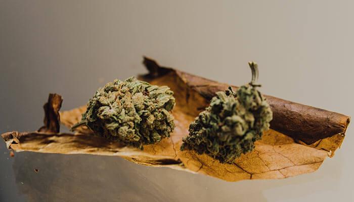 Tobacco-and-Cannabis-Blunt-Spliff