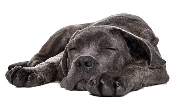 CBD-Dosage-for-Dogs