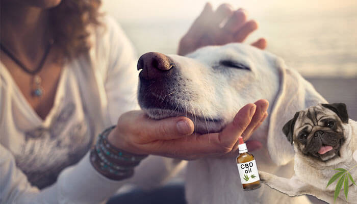 Complete-guide-to-cbd-for-dogs