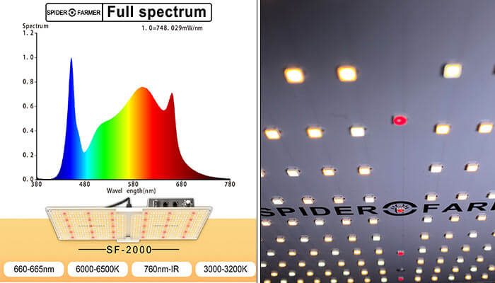 Light-Spectrum-Analysis-SF-2000